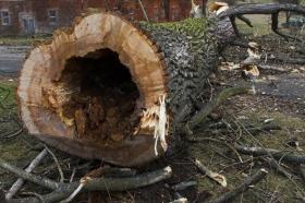 2009 Kácení stromu Květná_25