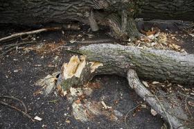 2009 Kácení stromu Květná_30