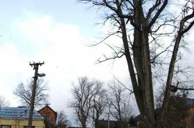 2009 Kácení stromu Květná_4