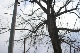 2009 Kácení stromu Květná_8