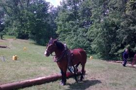2013 - Závody tažných koní